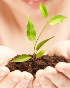 Eine grüne Pflanze wächst in einer Hand, Bild: istockphoto.com, cookelma