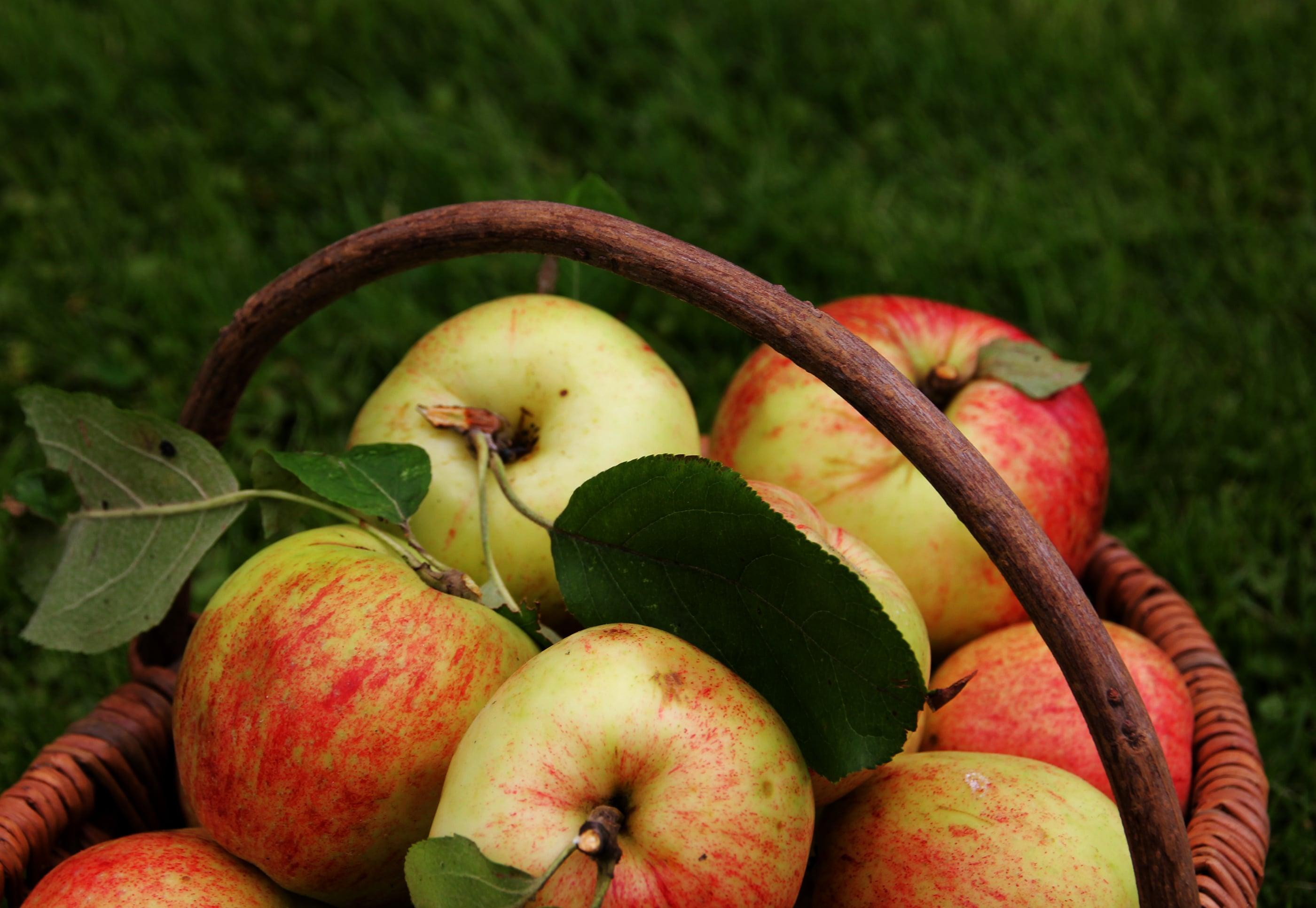 Äpfel in einem Korb