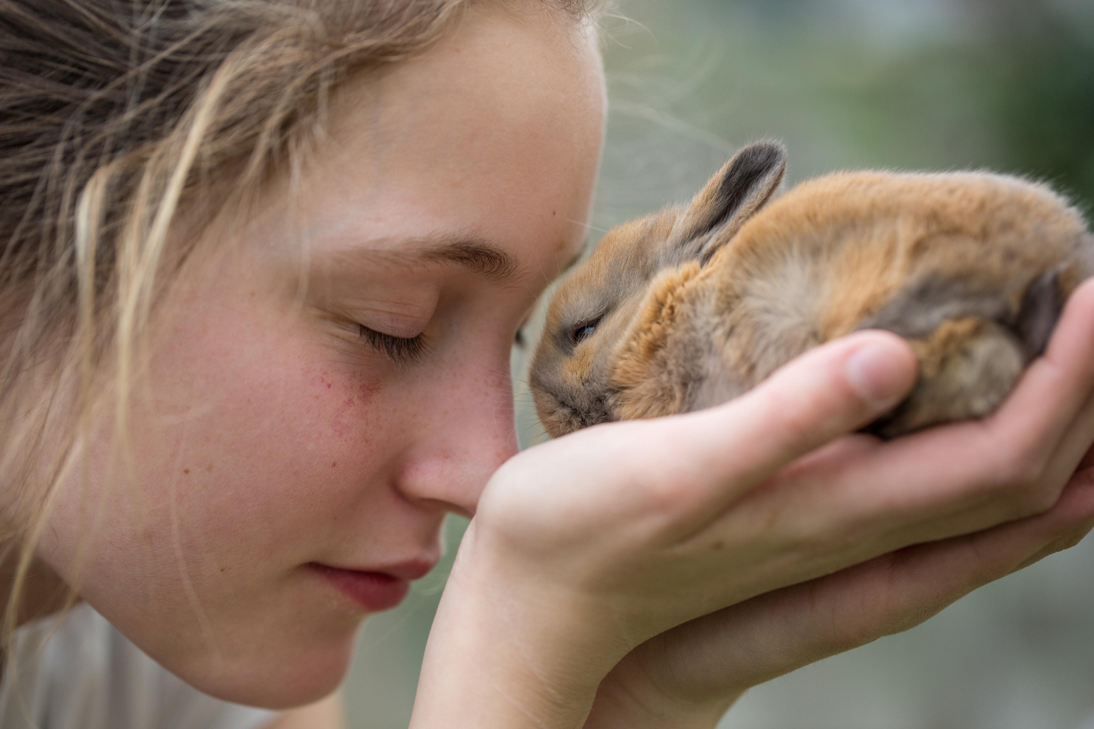Mädchen trägt kleines Kaninchen
