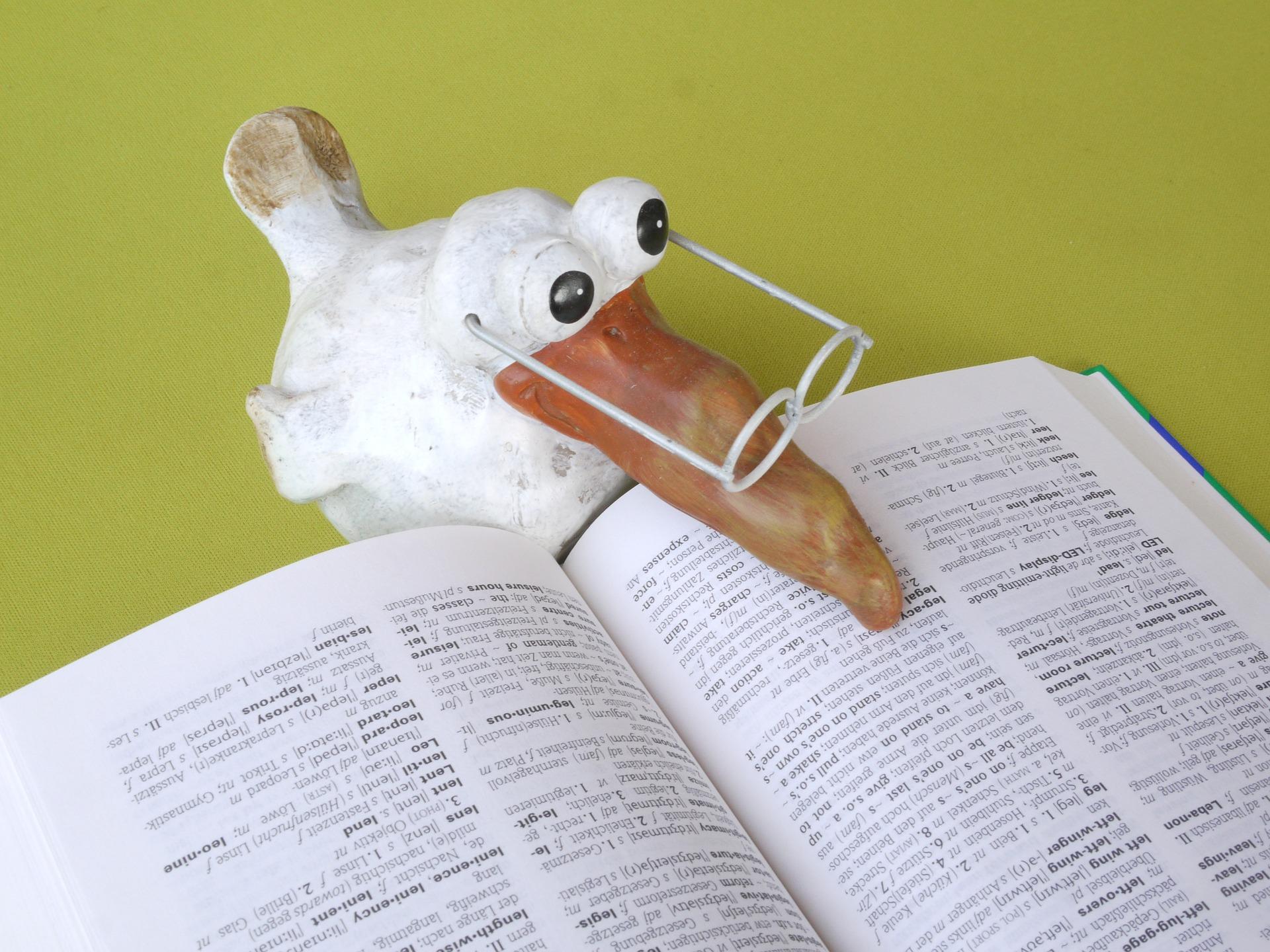 Vogel studiert