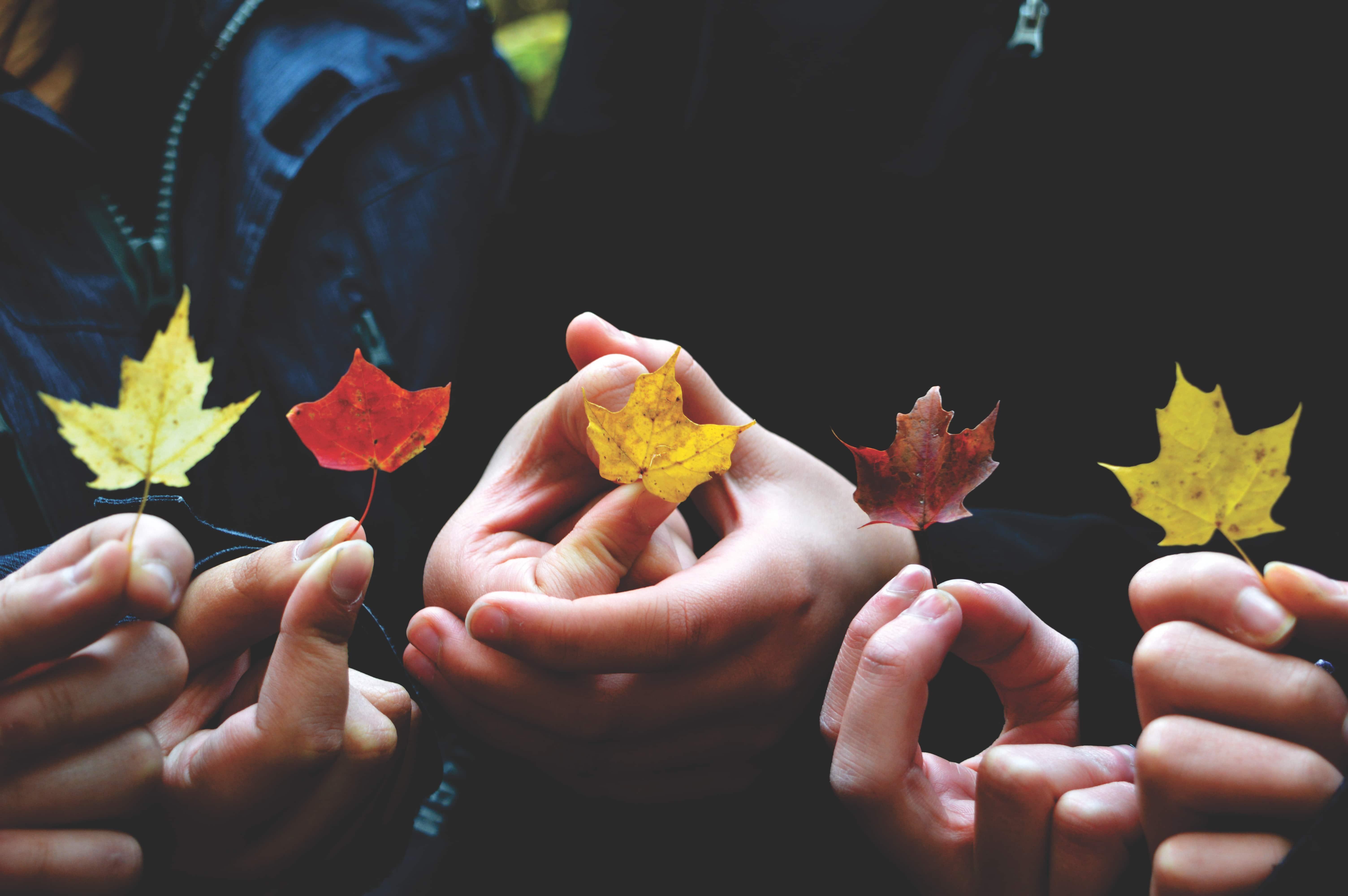 Hände halten Blätter