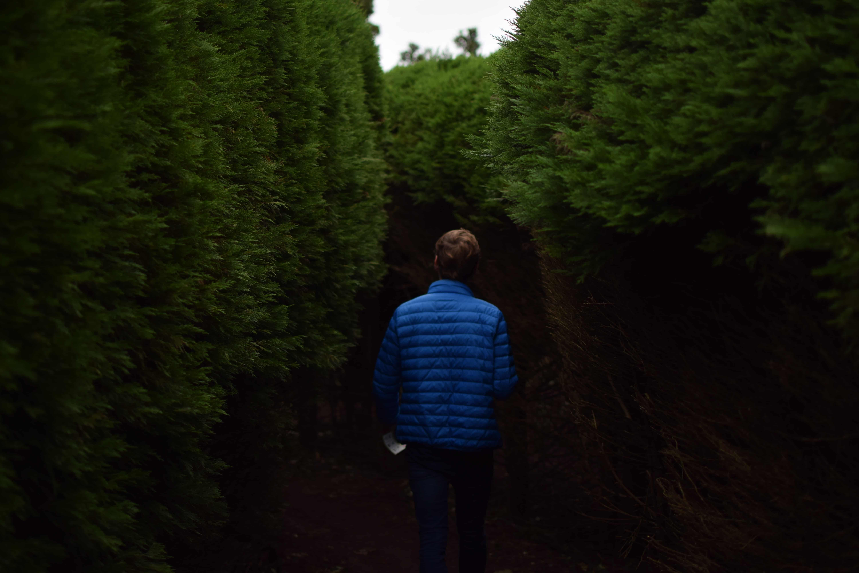 Mann zwischen hohen Bäumen