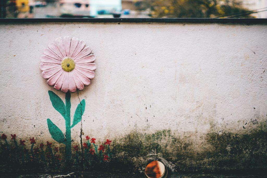 Mauer mit Blume