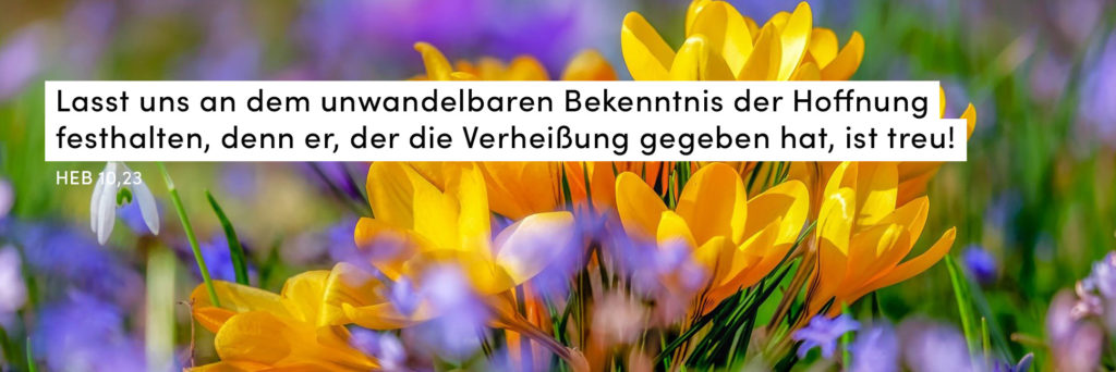 Frühling, Blumen, bunt