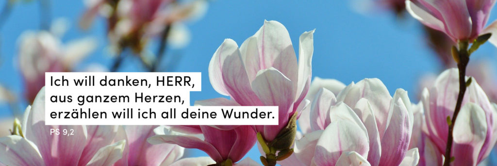 Magnolie, Blauer Himmel, Frühling