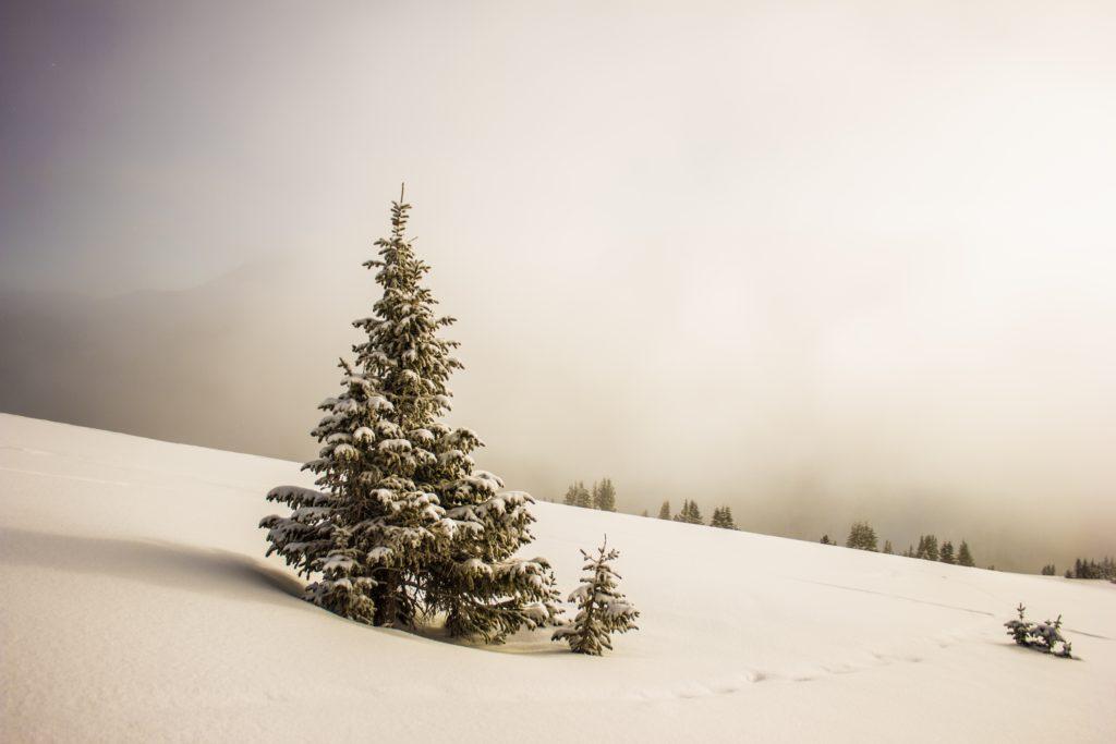 Schnee, Spuren