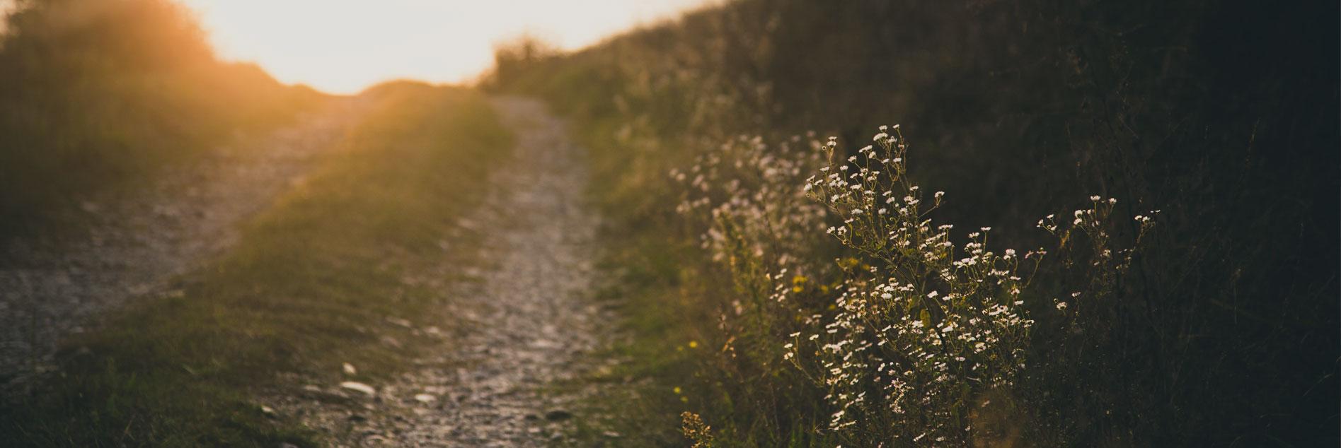 Ein Feldweg mit Sonnenschein