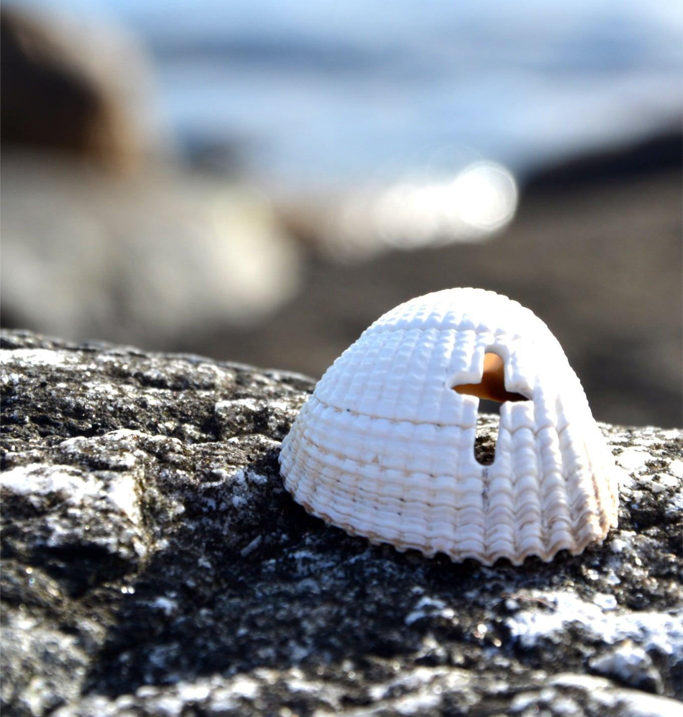 eine Muschel mit einem Kreuz