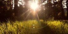 Sonne blinzelt im Wind durch Wald und Wiesen.