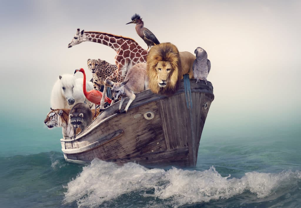 Tiere auf einem Boot