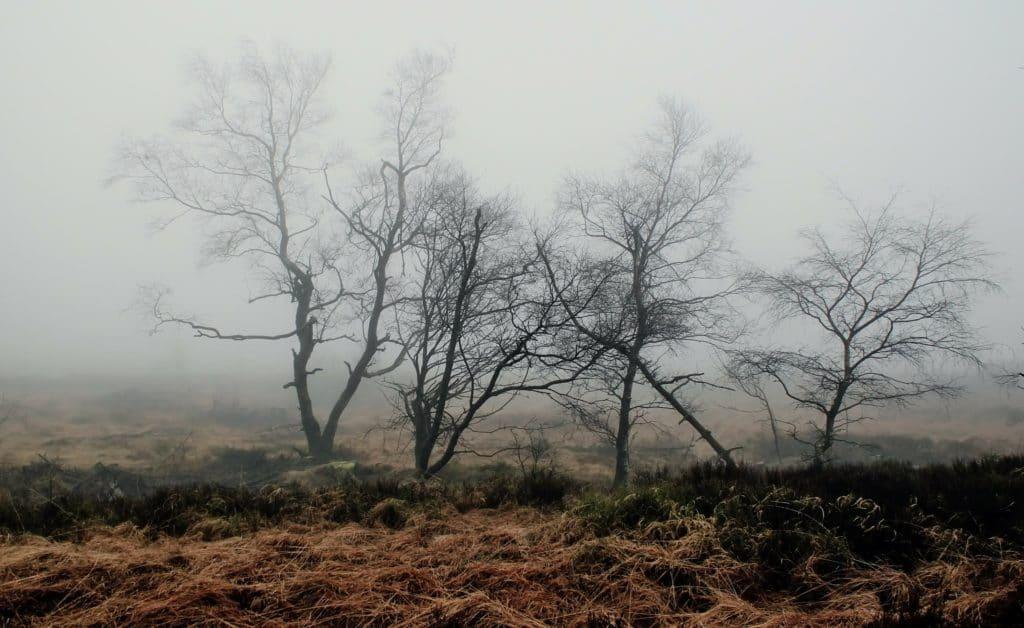 kahle Bäume im Moor