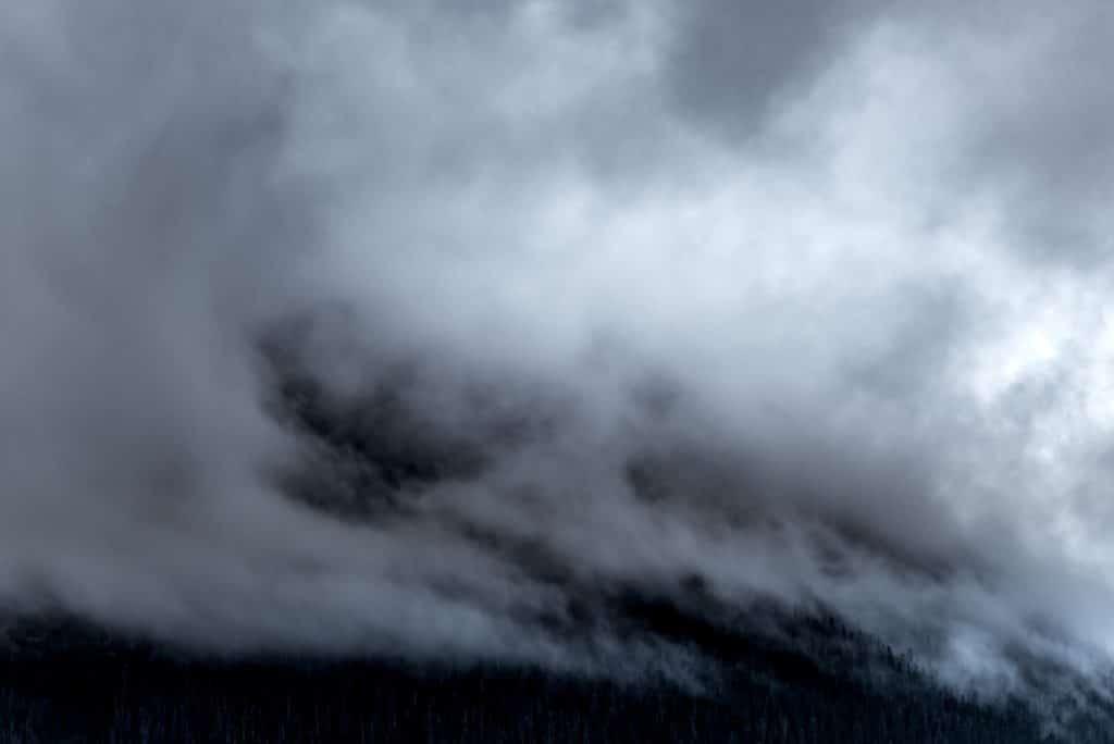 Nebel über dem Wald