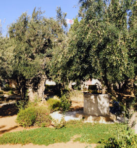 Garten Gethsemane in Jerusalem