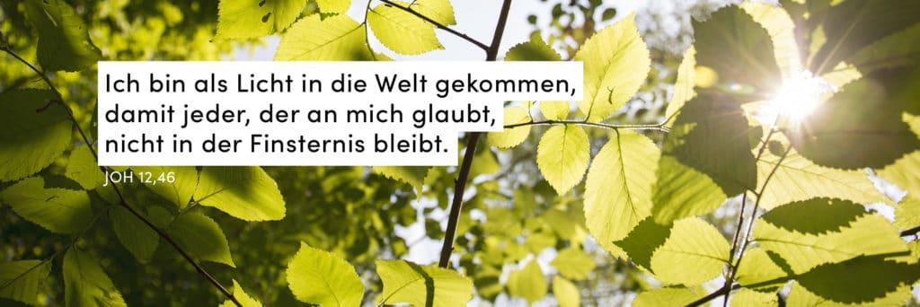 Blätter, grün, Sonne