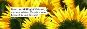 Sonnenblumen, Gelb