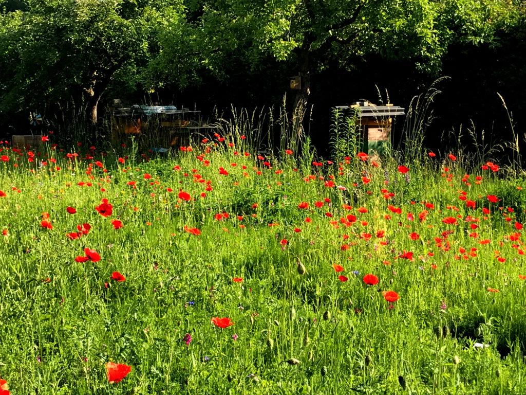 Bienenstock, Mohn, Priesterseminar, Garten, Sommer