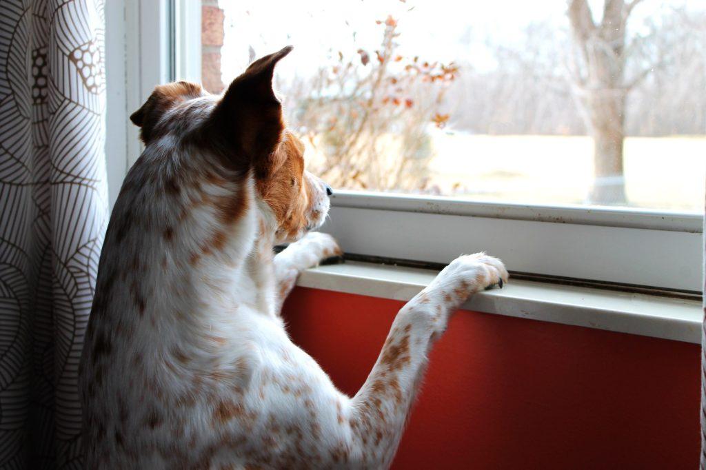 ein Hund wartet vor einem Fenster