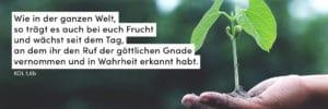 Pflanze, wachsen, zart