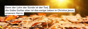 Herbst, Laub, Sonne