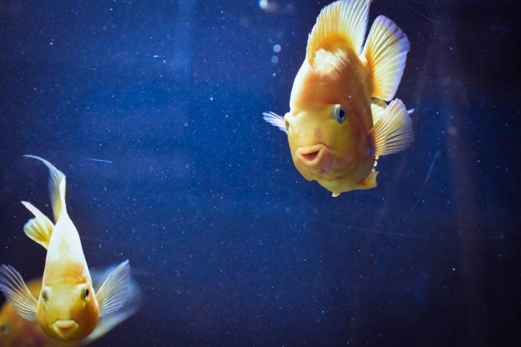 Zwei Fische im WAsser