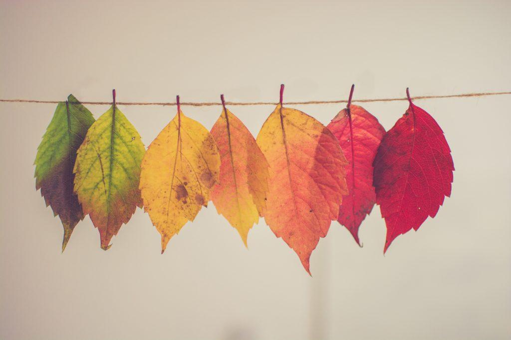 bunte Blätter an einer Schnur