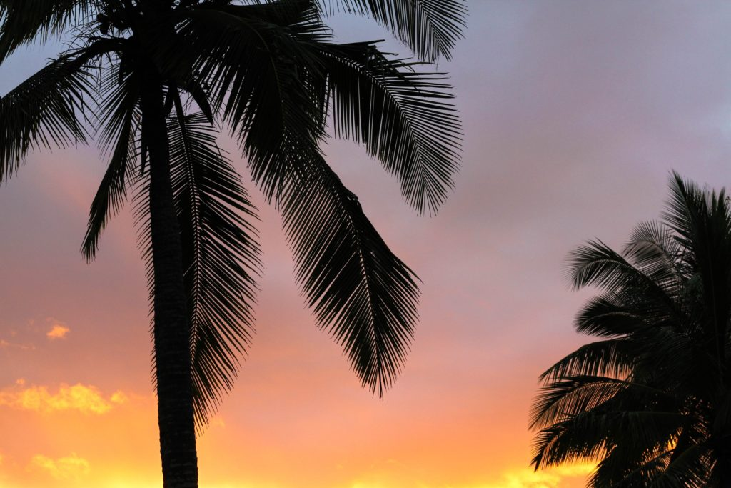 Palmen vor buntem Himmel