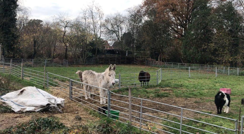Ein FEld mit einem Esel und Ziegen