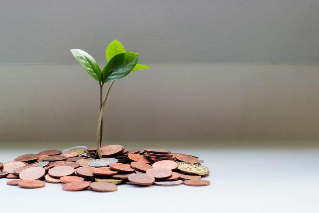 Ein grüner Zweig wächst aus einem Stapel von Münzen