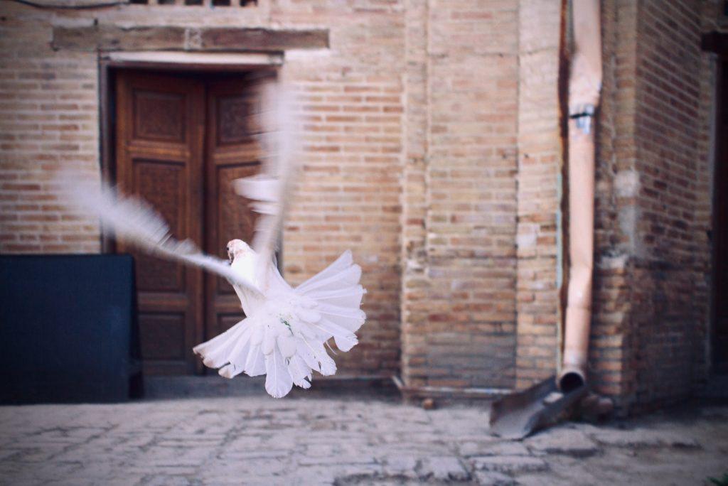 Flügelschlag einer weißen Taube