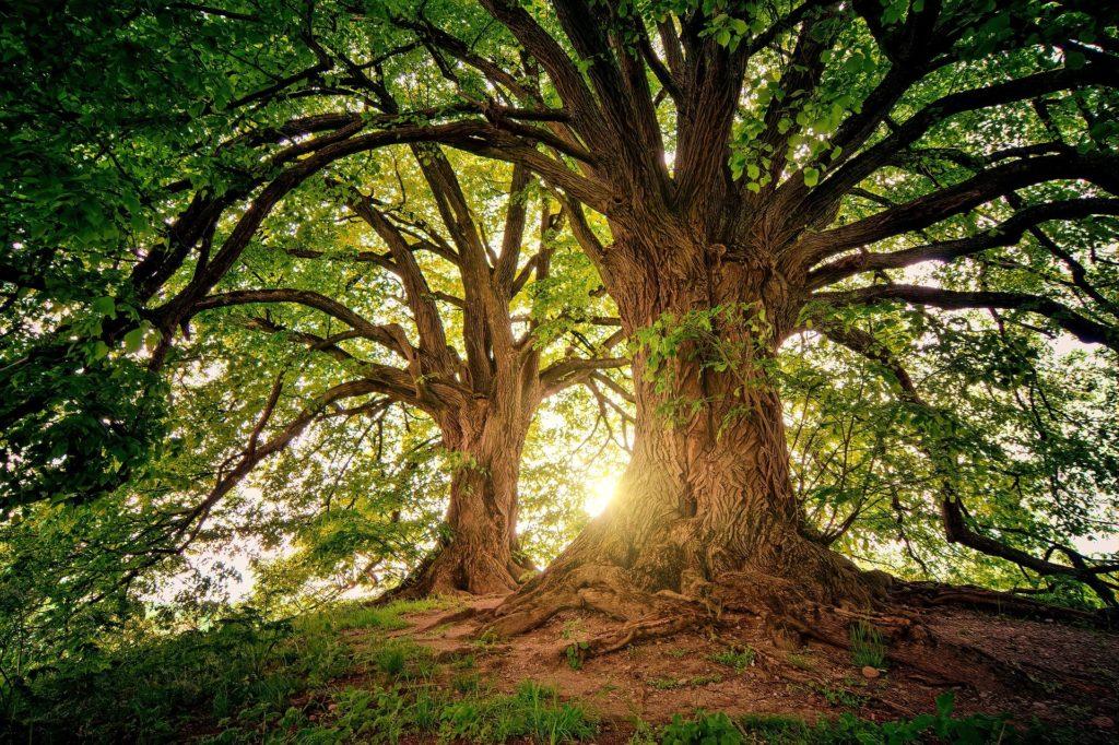 Bäume in der Sonne