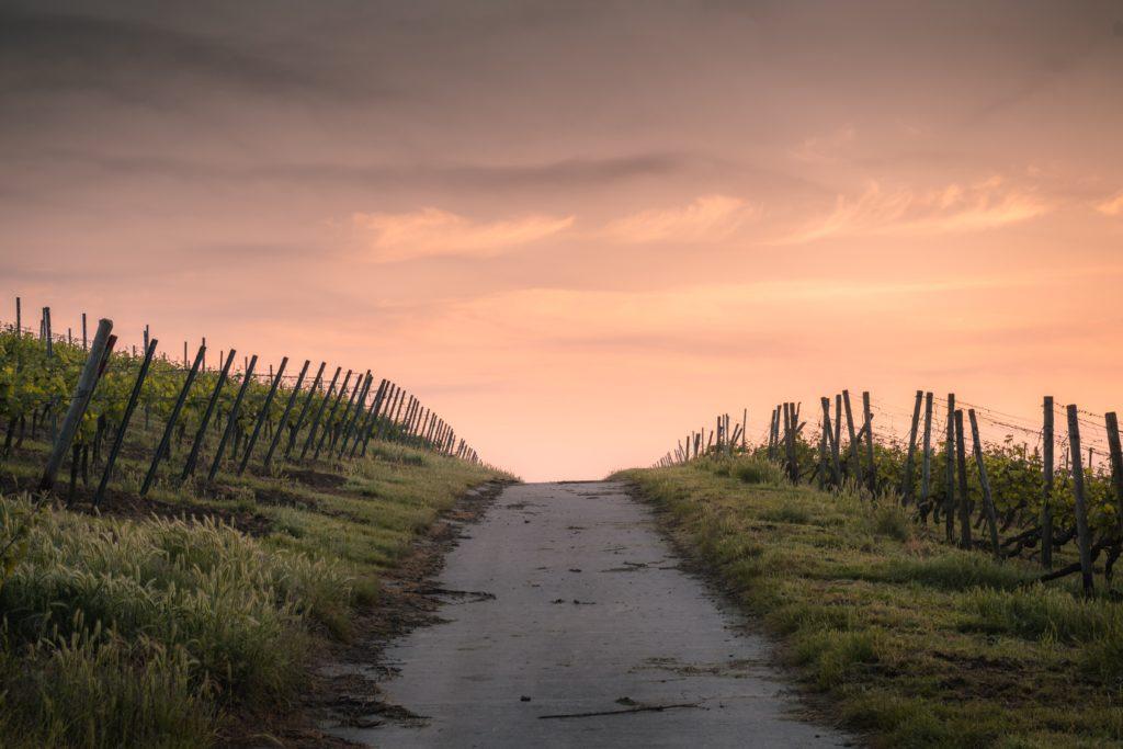 Ein Weg durch Weinberge