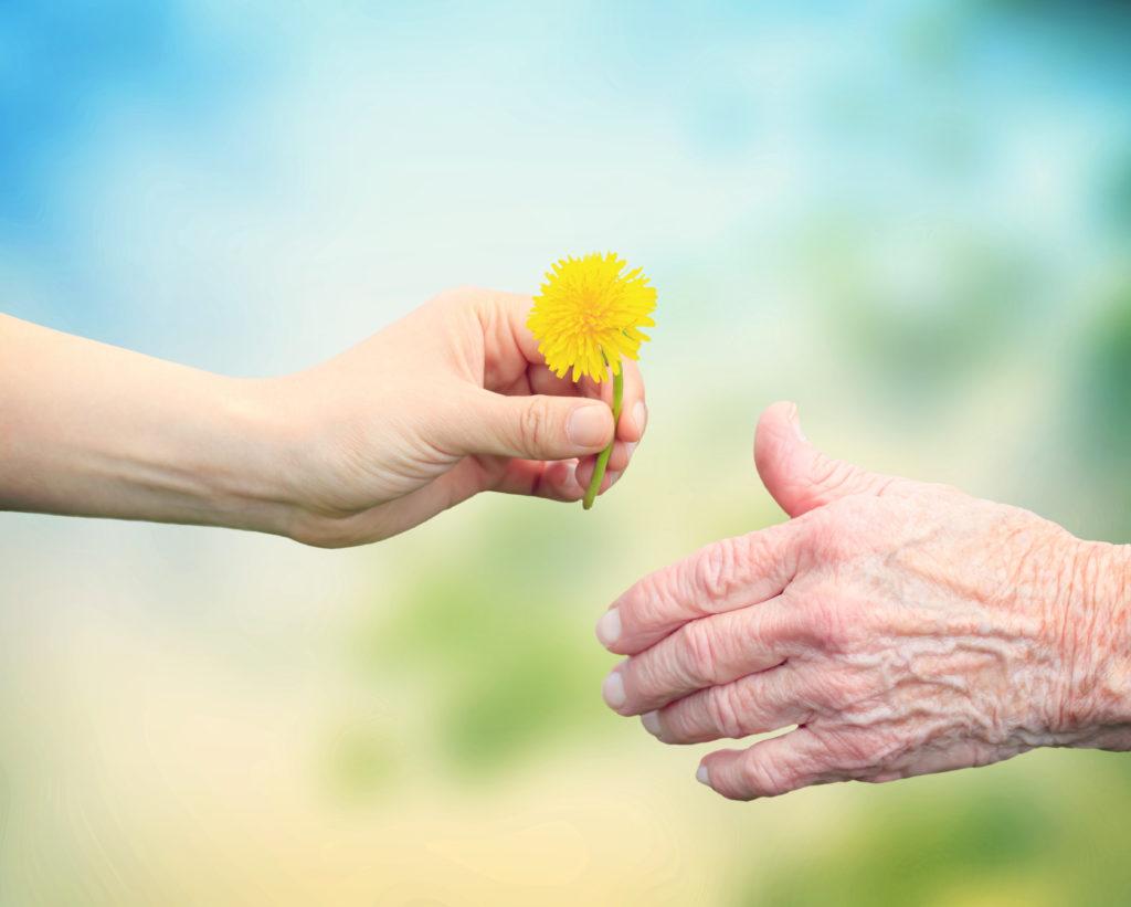 Hände reichen eine Blume