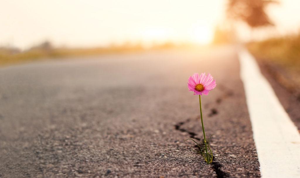 Blume auf einer Straße