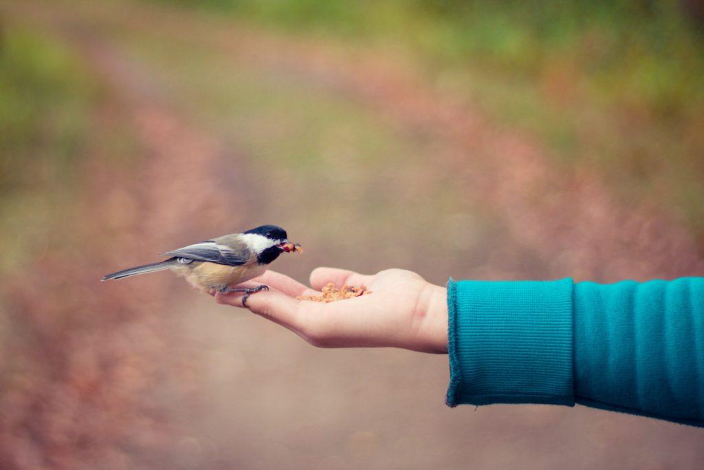 Vogel frisst aus der Hand